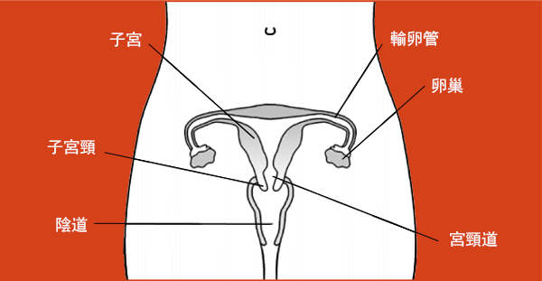 desktop_Corpus_Uteri_Cancer_chi