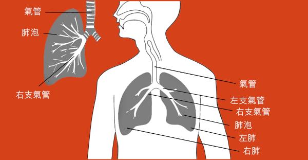 desktop_cancer_factsheet_lung_cancer_cn